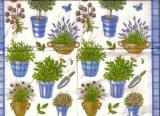 Frisch gepflanzt - Fresh planted