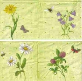 Blumen & Insekten