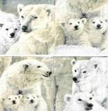 Eisbären - Ice cool - Polar bear