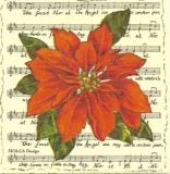 Christstern auf Noten - X-mas flower on notes