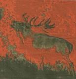 Hirsch - Deer, Stag - Cerf