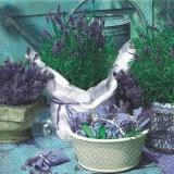 Duft von Lavendel - Scent of lavender - Parfum de lavande