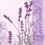 Zarter Lavender