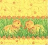 2 Küken im Gras