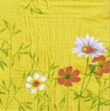 Frühlingsblumen & Gräser  - Spring flowers