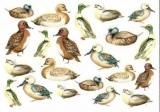 Vogelschar - Birds